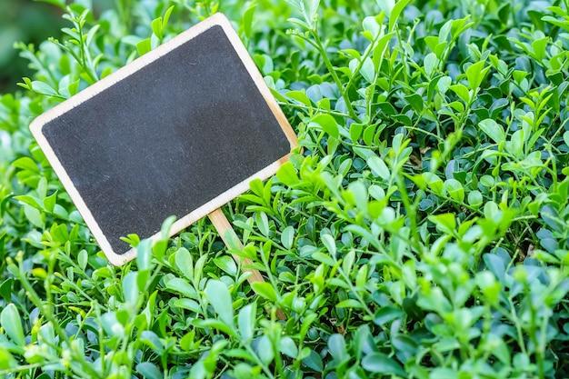Closeup tableau en bois noir sur fond texturé plante verte