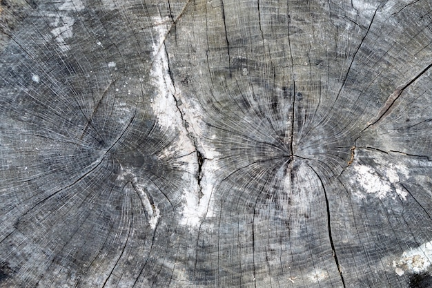 Closeup texture en bois coupée