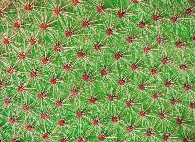 Closeup texture cactus