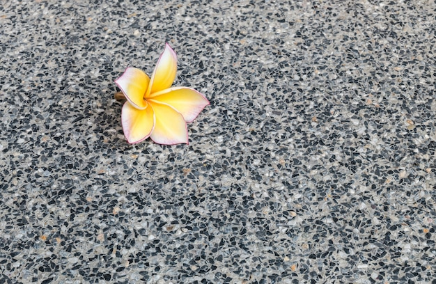 Closeup tombé fleur jaune sur fond de texture de sol en marbre noir