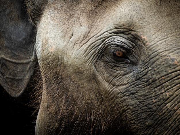 Closeup vieil éléphant dans le sanctuaire de la thaïlande