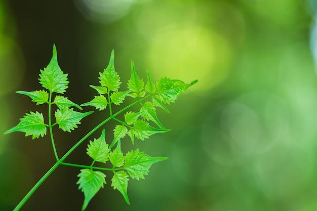 Closeup vue de jeune feuille verte sur fond de verdure floue utilisant comme concept de fond