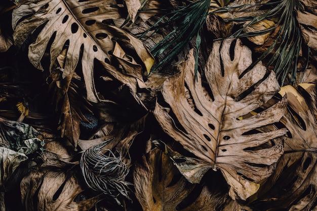 Closeup vue naturelle de la texture des feuilles de monstera concept d'automne fond d'écran nature fond coloré