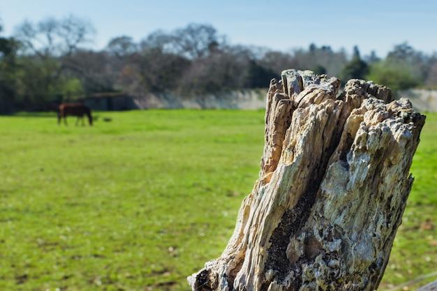 Clôture de bâton agrandi dans un pré avec un cheval et des arbres. fond rural avec un espace pour copier du texte