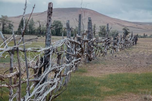 La clôture de branches se dresse contre les montagnes. clôture atmosphérique