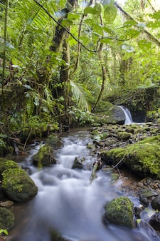 Cloud forest stream, costa rica