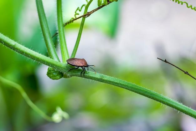 Coccinelle de coléoptère marchant sur une branche végétale de gourde de bouteille se bouchent