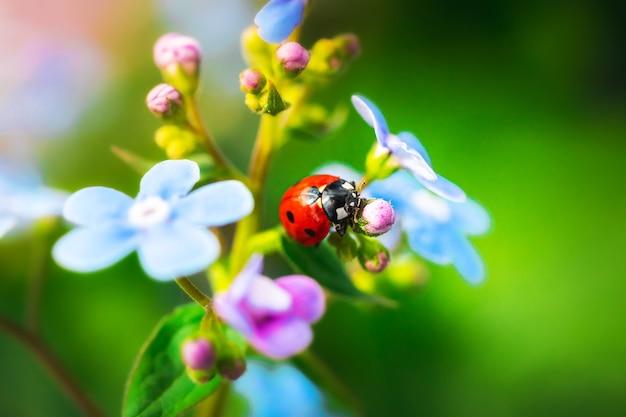 Coccinelle sur jardin, nature été et printemps photo macro