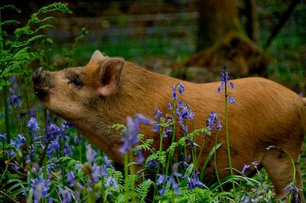 Un cochon dans les bois.