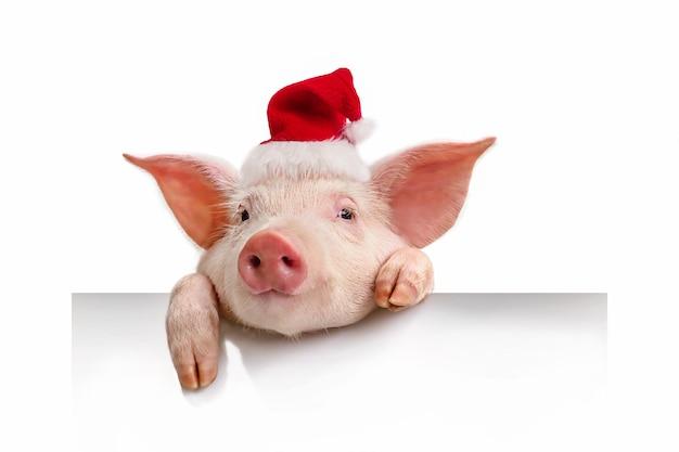 Cochon dans un chapeau de père noël rouge isolé sur blanc, son accrochant une bannière blanche