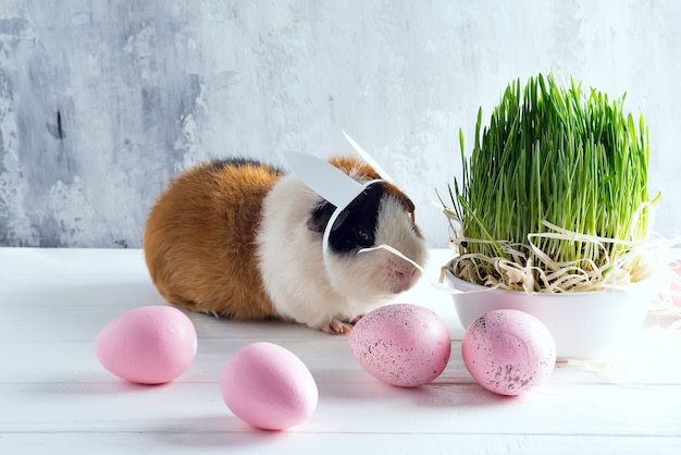 Cochon d'inde avec les oreilles du lapin de pâques sur fond de pierre