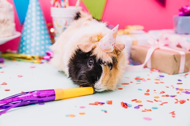 Cochon d'inde portant un chapeau de fête minuscule sentant le souffleur de corne sur fond bleu