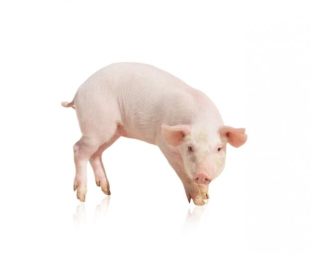 Cochon rose isolé