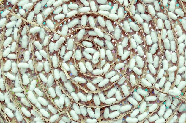 Cocons de vers à soie pour l'industrie du vêtement avec une réputation de thaïlande.
