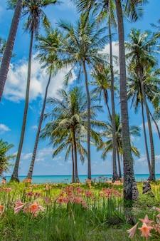 Des cocoteraies au bord de la mer et de belles fleurs sont plantées