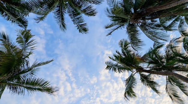 Cocotier avec ciel bleu, été