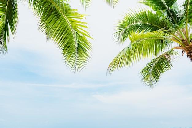 Cocotier avec un ciel bleu pour les vacances d'été et concept de vacances.
