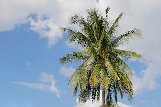 Cocotier avec ciel bleu