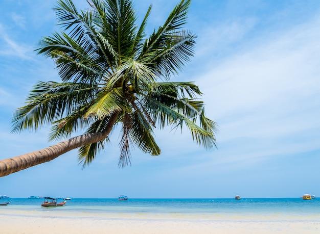 Cocotier avec ciel pour l'été et la plage