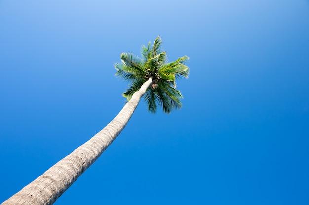 Cocotier dans le ciel bleu