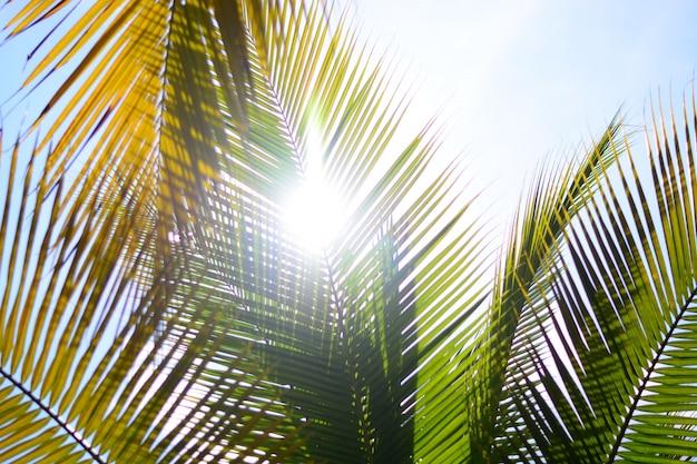 Cocotier en été avec fond de ciel