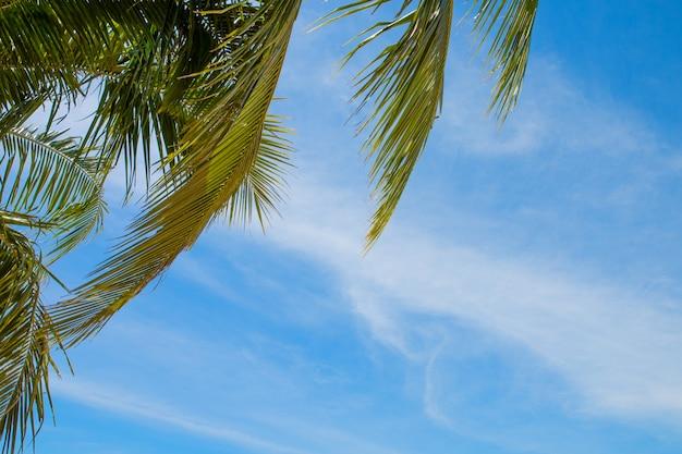 Cocotier avec fond de ciel bleu