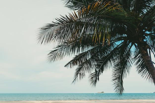 Cocotier avec grand congé sur la plage.
