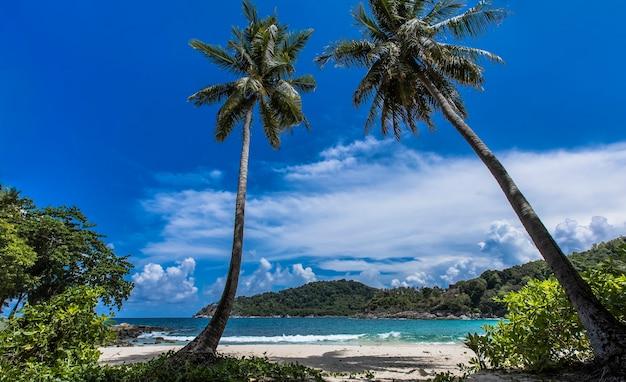 Cocotier et mer tropicale vacances d'été et concept de plage tropicale