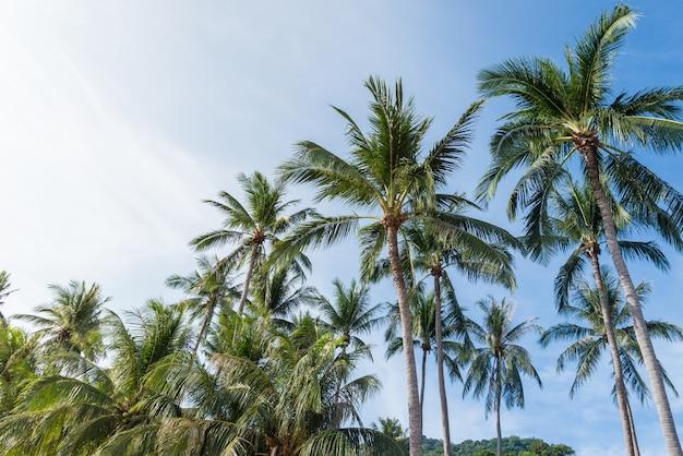 Cocotier sur la plage de thaïlande, cocotier avec un ciel bleu sur la plage