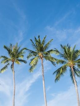 Cocotier sur la plage de thaïlande, cocotier avec ciel flou sur la plage