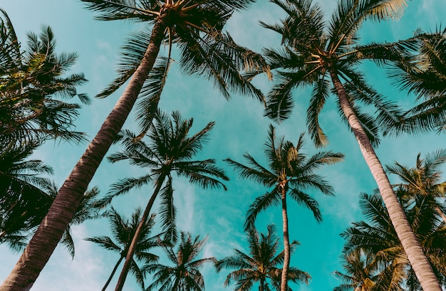 Cocotier sur la plage de thaïlande, cocotier avec ciel flou
