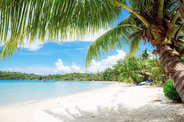 Cocotier sur le sable à la mer en thaïlande.