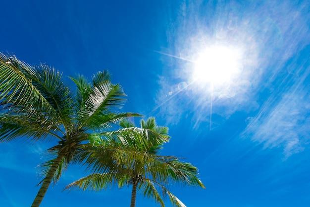 Cocotiers, beau fond tropical