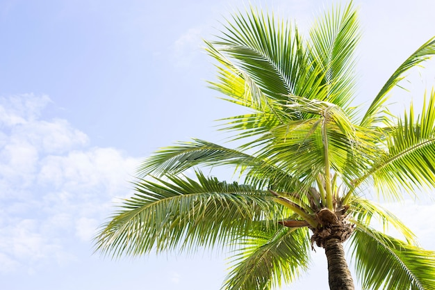 Cocotiers, beau tropical avec ciel et nuages.