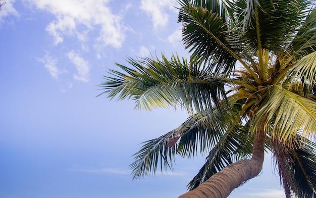 Cocotiers avec ciel bleu