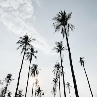 Des cocotiers exotiques tropicaux solitaires contre le ciel bleu