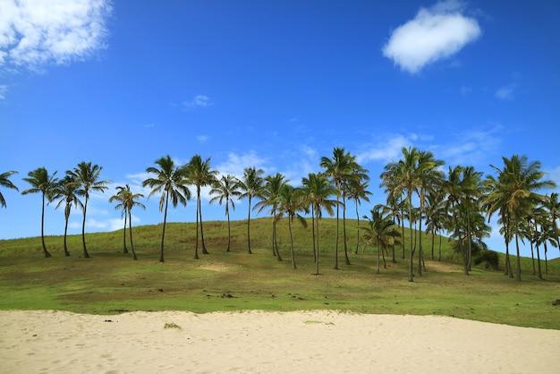 Cocotiers le long de la plage de sable avec le ciel bleu vif