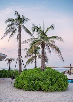 Cocotiers avec parasol sur la plage