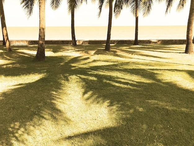Cocotiers verts sur l'herbe dans la plage ensoleillée