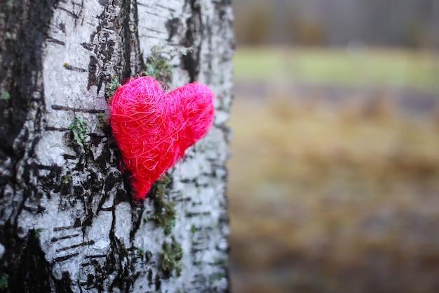Coeur décoratif sur écorce de bouleau.