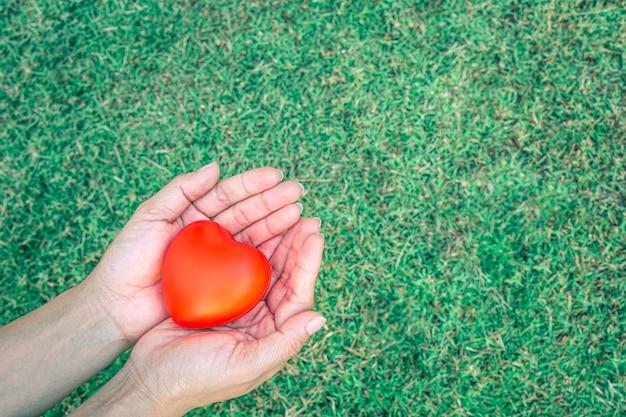 Coeur rouge dans la paume de la main, à l'arrière-plan d'un jardin d'herbe vert vif