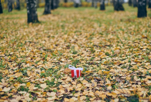 Coffret cadeau en automne les feuilles tombées au sol dans le parc