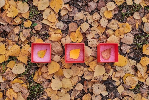 Coffret cadeau d'automne avec des feuilles