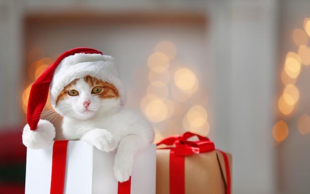 Coffret cadeau avec un chat mignon en chapeau de père noël contre les lumières de noël floues