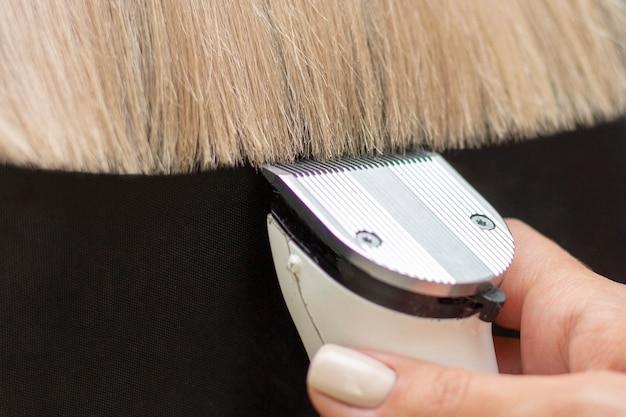 Coiffeur avec une machine à cheveux. couper les pointes fourchues des cheveux avec une tondeuse. fermer. cheveux blonds sur fond sombre