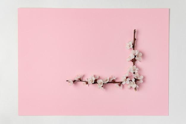 Coin de branches fleuries blanches sur fond rose. fond de printemps. modèle.