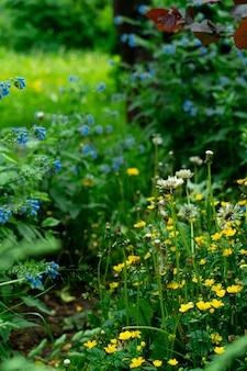 Coin d'un jardin avec des fleurs jaunes et bleues