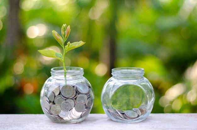 Coin tree glass jar plant poussant à partir de pièces de monnaie situées à l'extérieur du bocal en verre