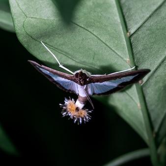 Coléoptère à ailes blanches