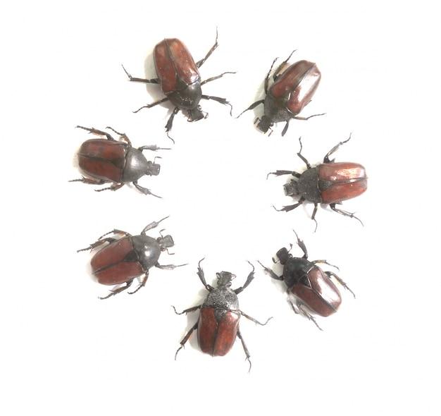 Coléoptères placés dans un cercle